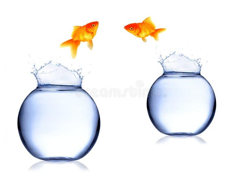 Download Troca dos peixes imagem de stock. Imagem de ouro, bacia - 16851525