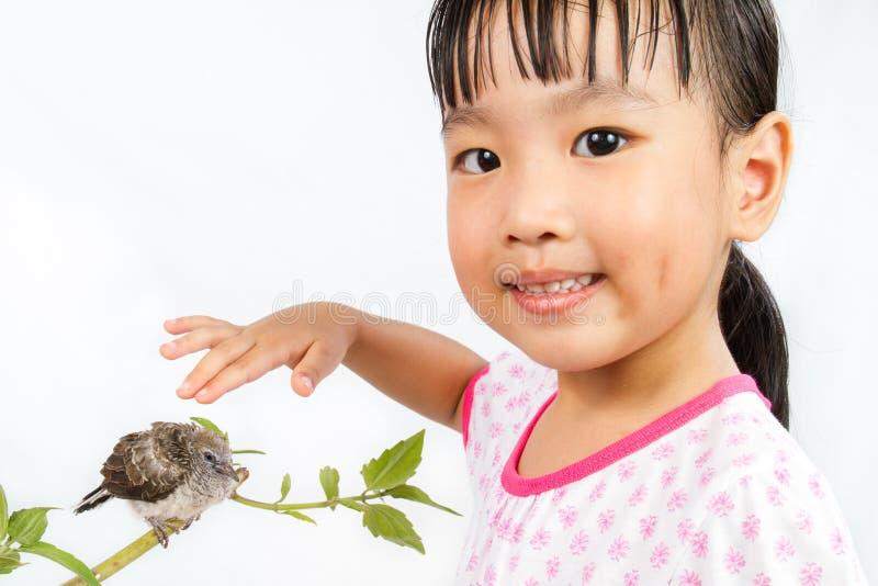 Trocas de carícias chinesas pequenas asiáticas da menina um cuco pequeno foto de stock