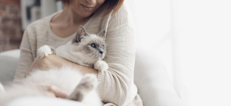 Trocas de carícias da mulher seu gato bonito em casa imagem de stock royalty free