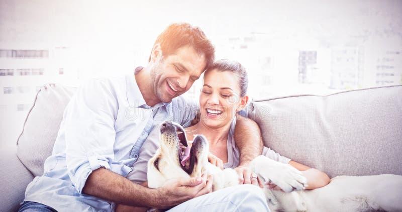Trocas de carícias felizes dos pares seu Labrador amarelo no sofá foto de stock