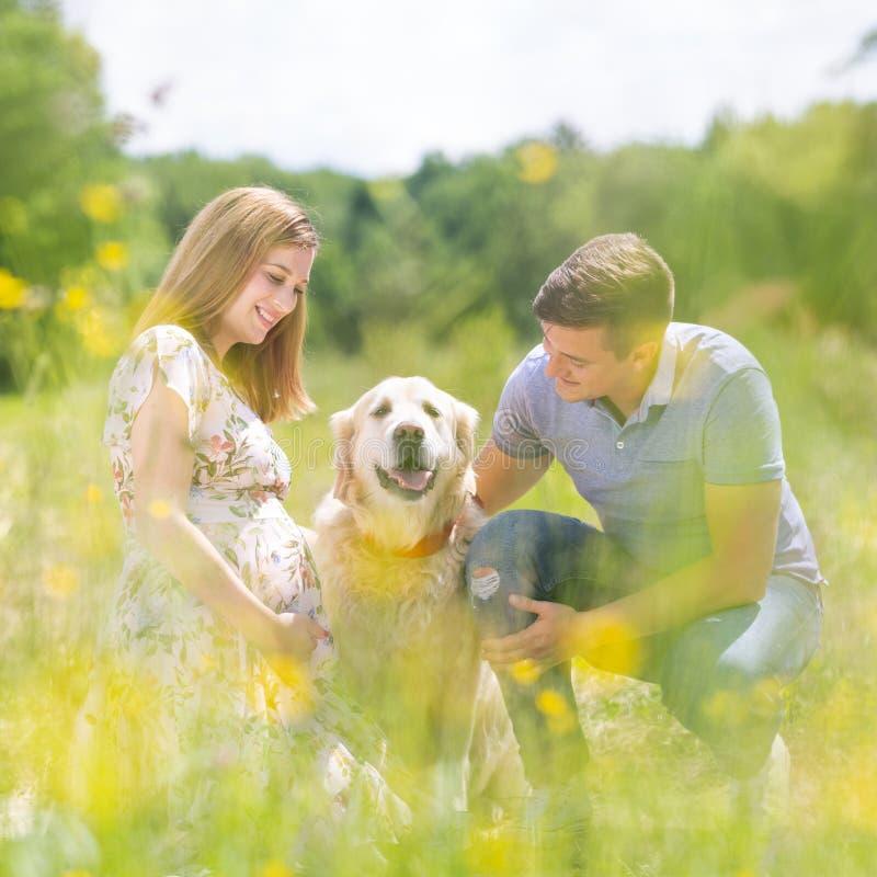 Trocas de carícias grávidas felizes novas dos pares é cão do golden retriever fora no prado imagens de stock