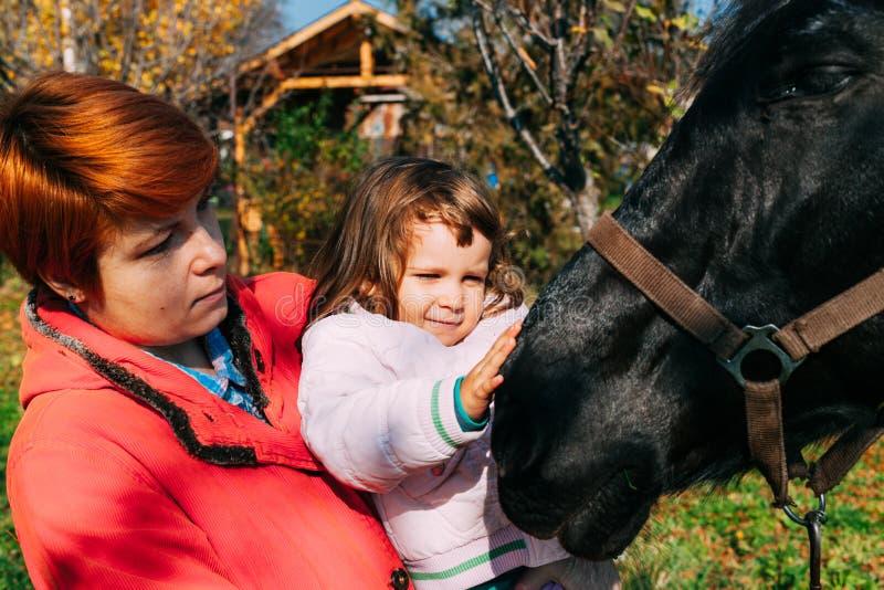 Trocas de carícias um cavalo fotografia de stock royalty free