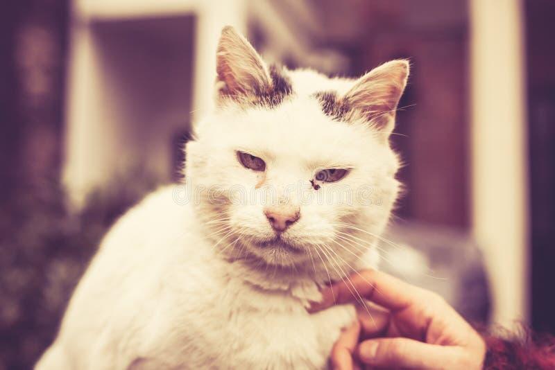 Trocas de carícias um gato de aleia imagens de stock