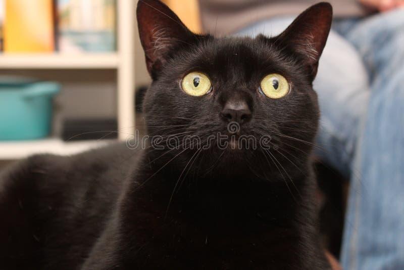 trochę czarny kot fotografia stock