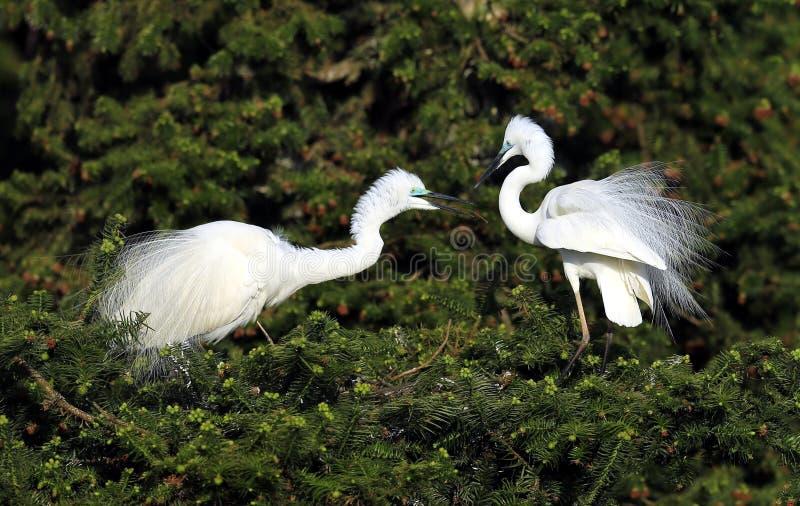 Download Trochę egret obraz stock. Obraz złożonej z greenbacks - 53780025
