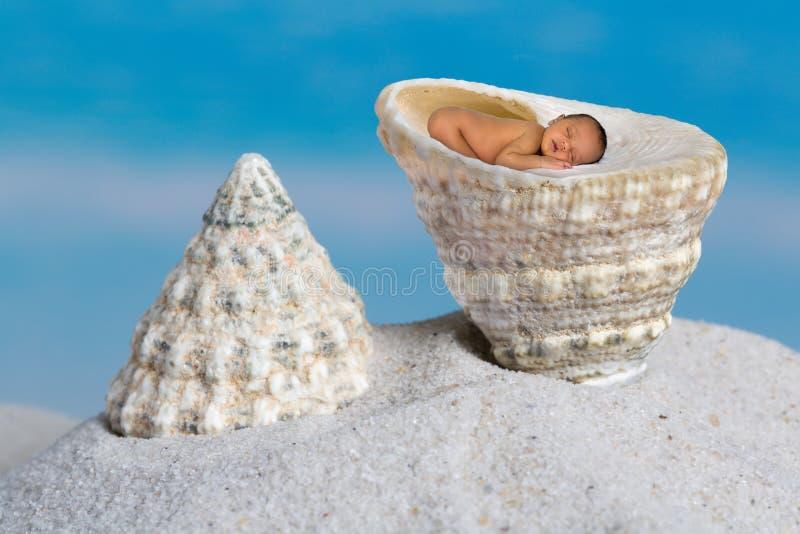 Trochus snäckskal på stranden royaltyfria bilder