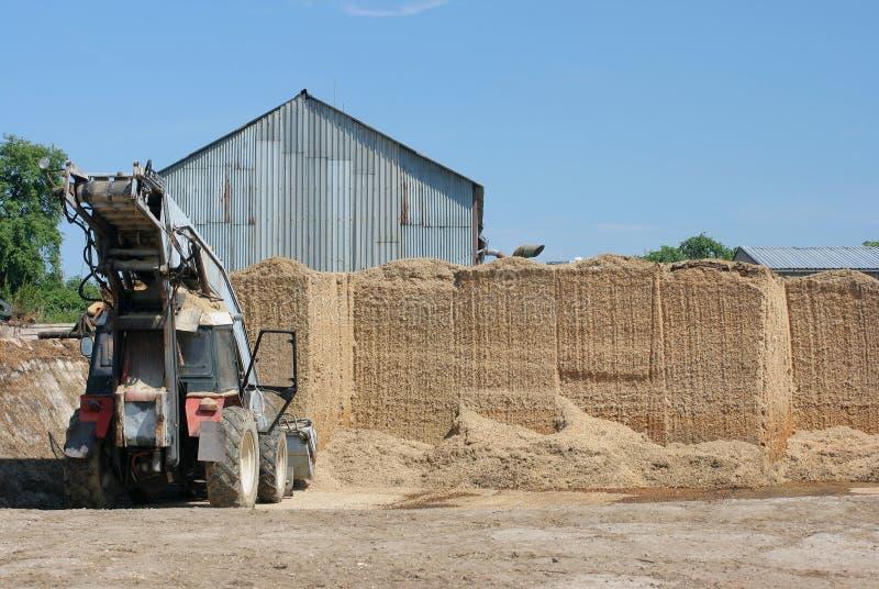 trociny biomasy zdjęcia stock