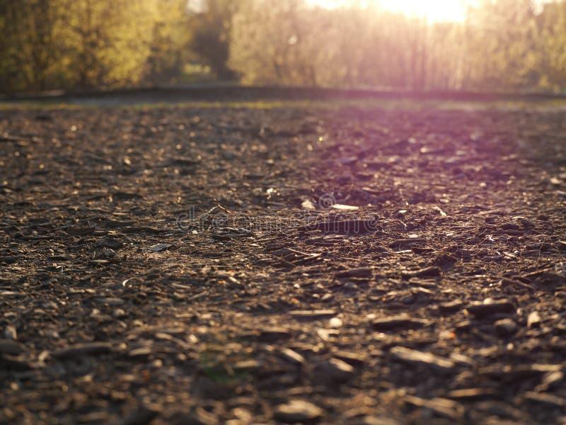 Trociny i brud w słońcu zdjęcie royalty free