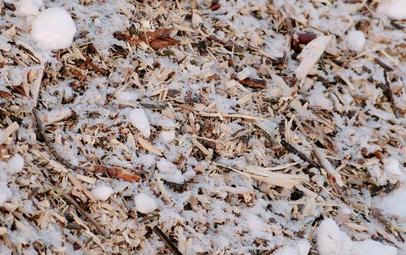 Trociny i gałązki piłujący drzewa w śniegu w górę Kamera rusza się od botoom wierzchołek zdjęcia royalty free
