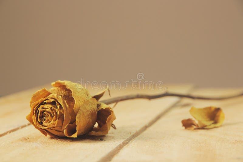 Trocken stieg mit einem Blumenblatt auf seinen Seiten lizenzfreies stockfoto