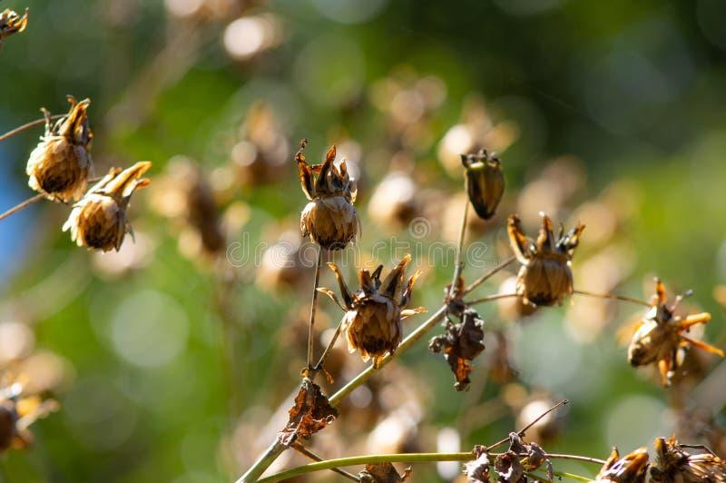 Trockenblumen, die über Baum hängen lizenzfreie stockbilder