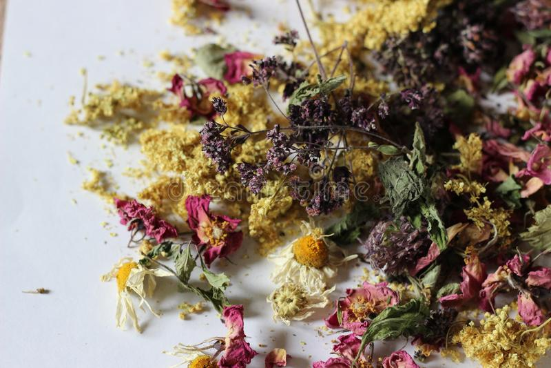 Trockenblumen für aromatischen Tee stockbild