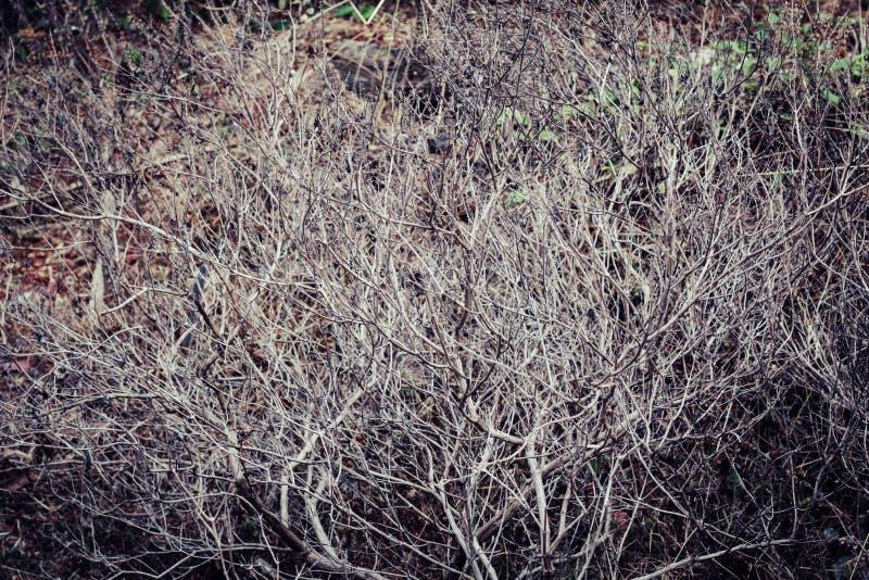 Trockene alte Baumaste, Weinlesehintergrundbeschaffenheit stockfotos