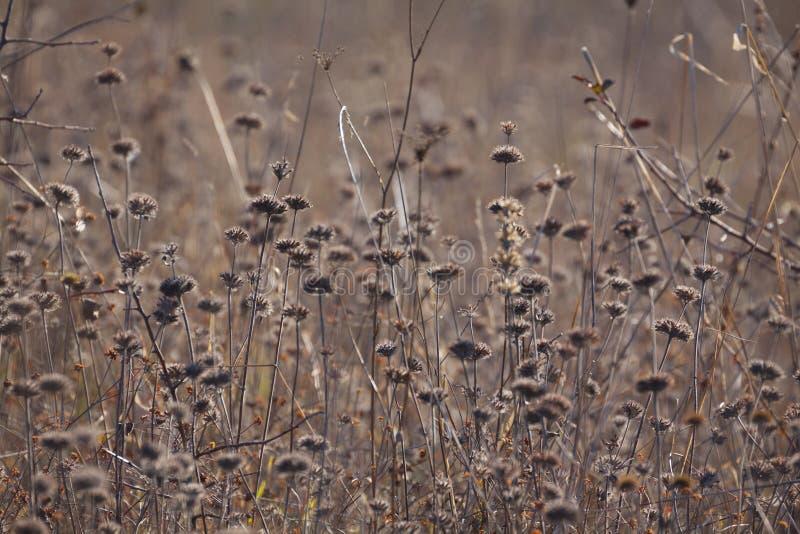 Trockene Anlagen und Blumen des Herbstes in der Wiese Hintergrund lizenzfreies stockbild