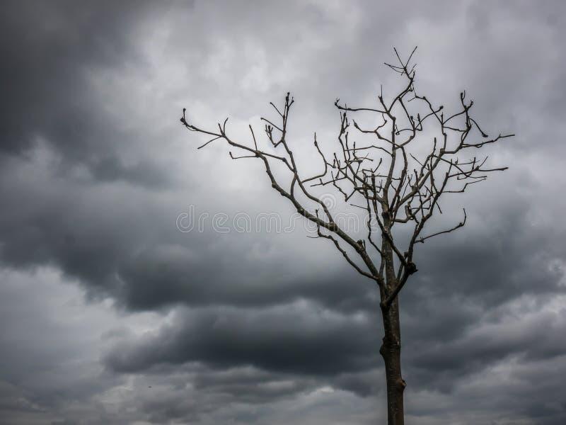 Trockene Bäume, einsamer Planet des klaren Himmels lizenzfreies stockbild