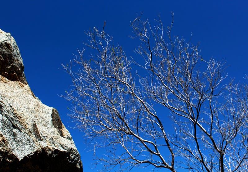 Trockene Baum- und Felsenlandschaft, Wüsten-Nationalpark Anza Borrego lizenzfreie stockfotos