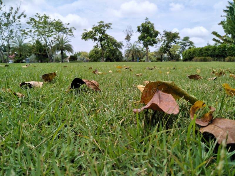 Trockene Blätter auf Grasrasen stockbilder