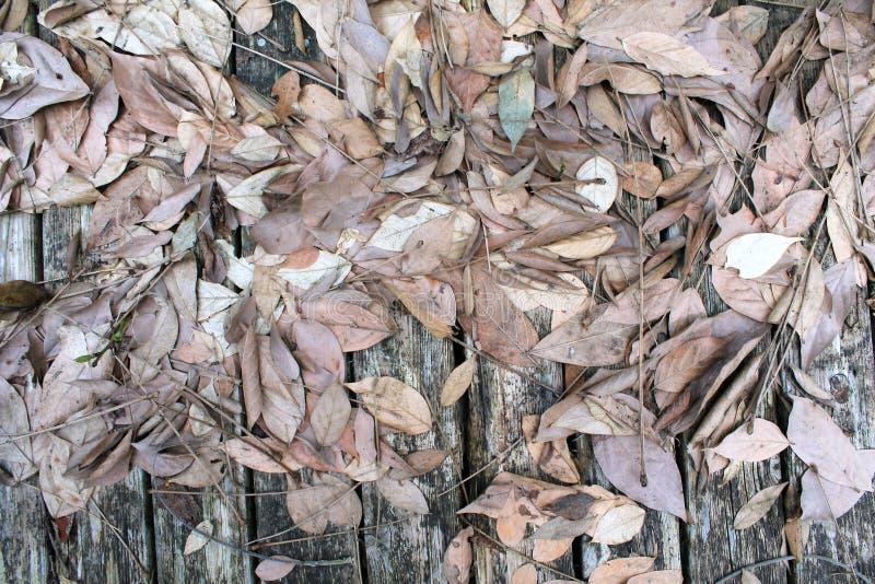 Trockene Blätter auf verwitterten grauen Bodenplatten lizenzfreie stockbilder