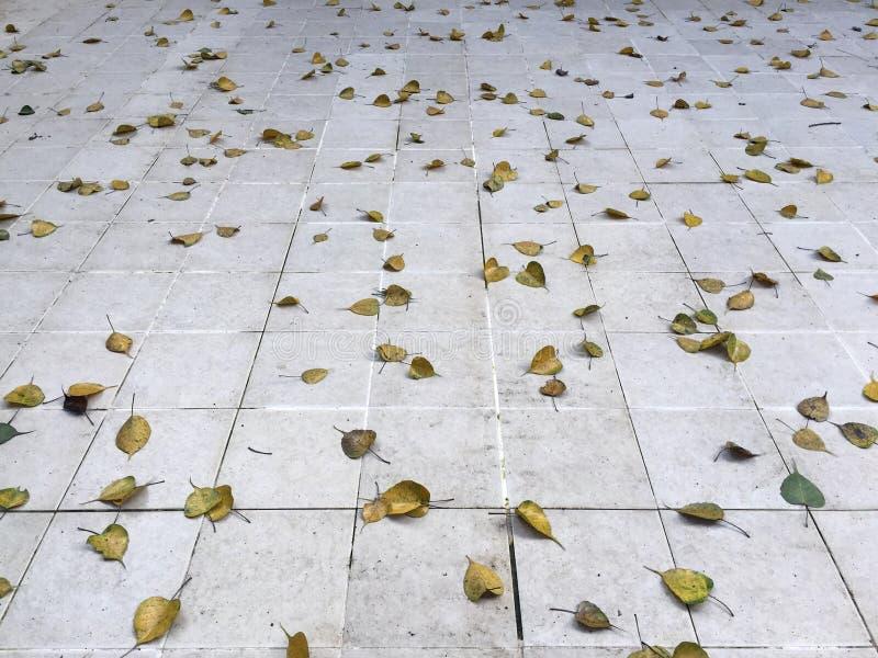 trockene Blätter und Fliesenboden lizenzfreies stockbild