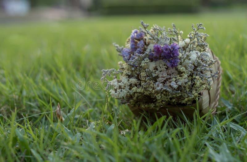 Trockene Blume stockbilder
