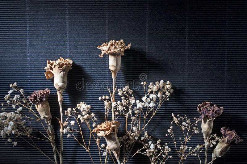 Trockene Blume auf Schwarzem 2 stockbild