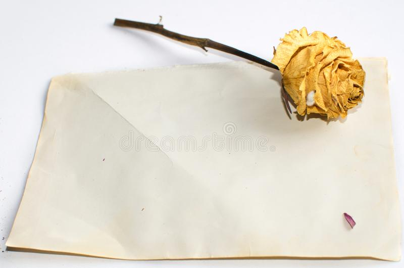 Trockene Blumen und ein leeres Blatt Papier lizenzfreie stockfotografie