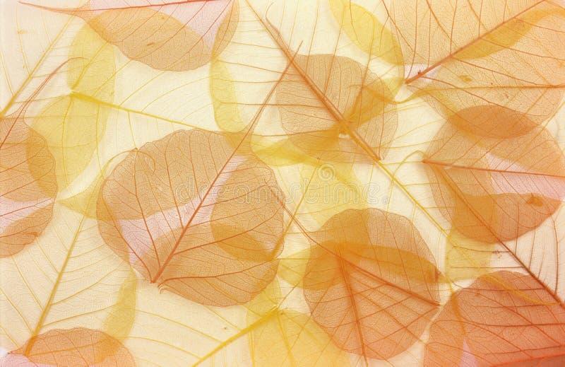 Trockene farbige Blätter stockbild