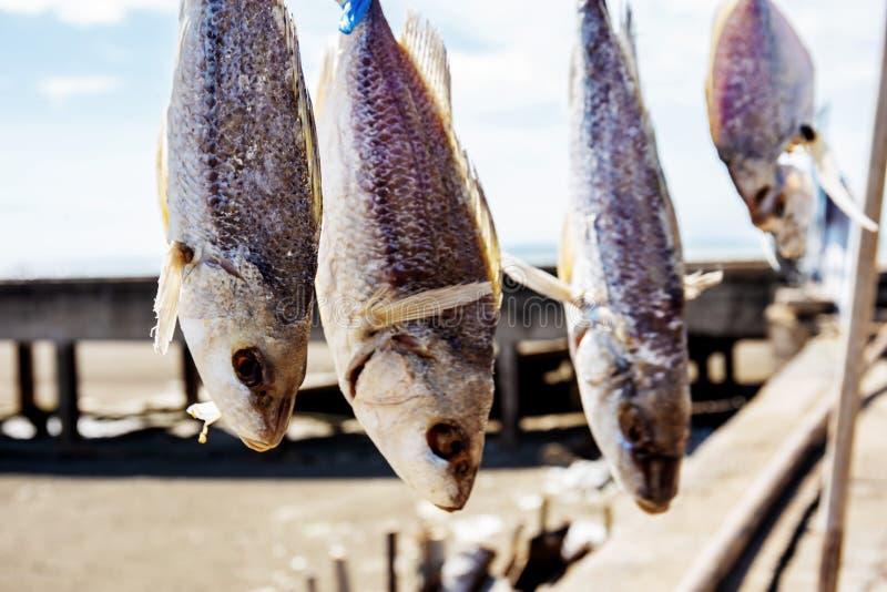 Trockene Fische des Hängens am Sonnenlicht lizenzfreies stockfoto