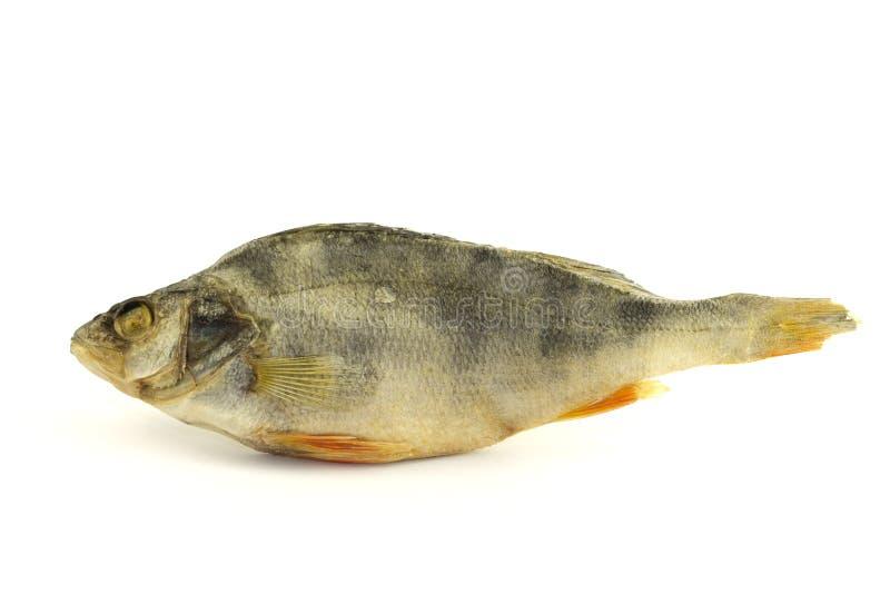 Trockene Fische lokalisiert auf weißem Hintergrund lizenzfreies stockbild