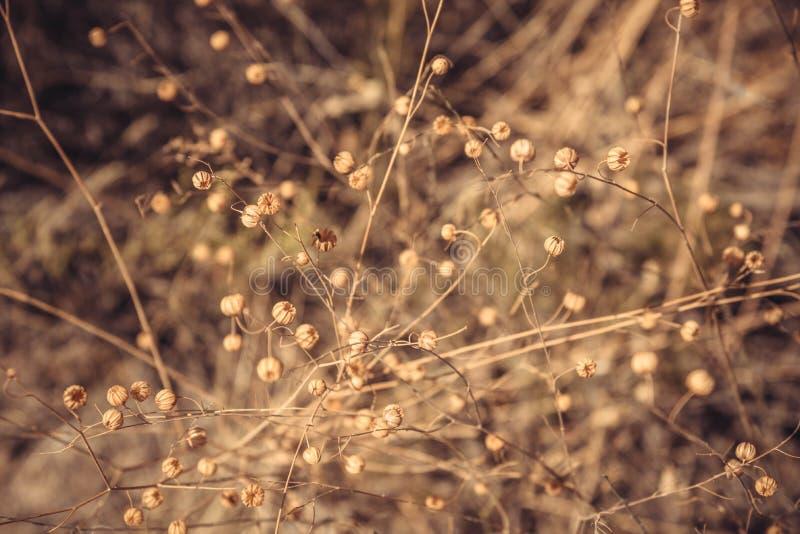 Trockene Flora im Sommer lizenzfreie stockbilder