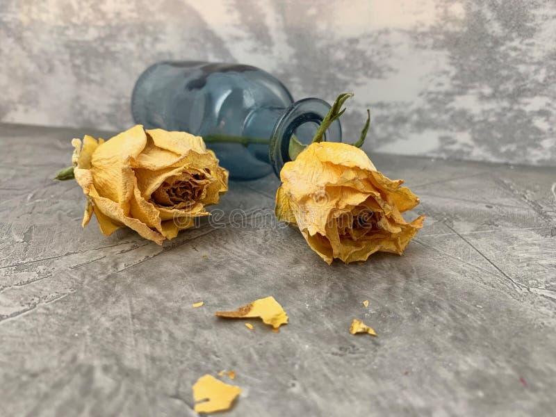 Trockene, gelbe Rosen stockfoto