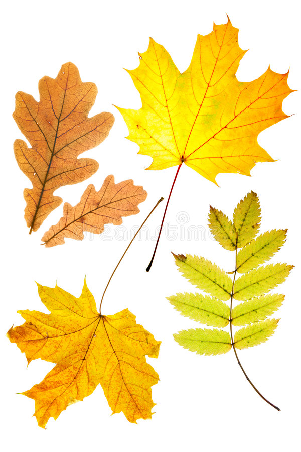 Trockene Herbstblätter stockfotos