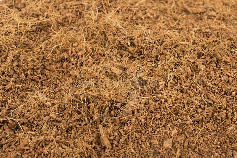 Trockene Kokosnuss-Coir stockfotos
