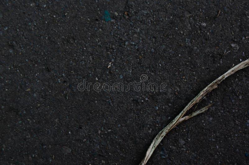 Trockene Niederlassung auf nassem Stein lizenzfreie stockbilder
