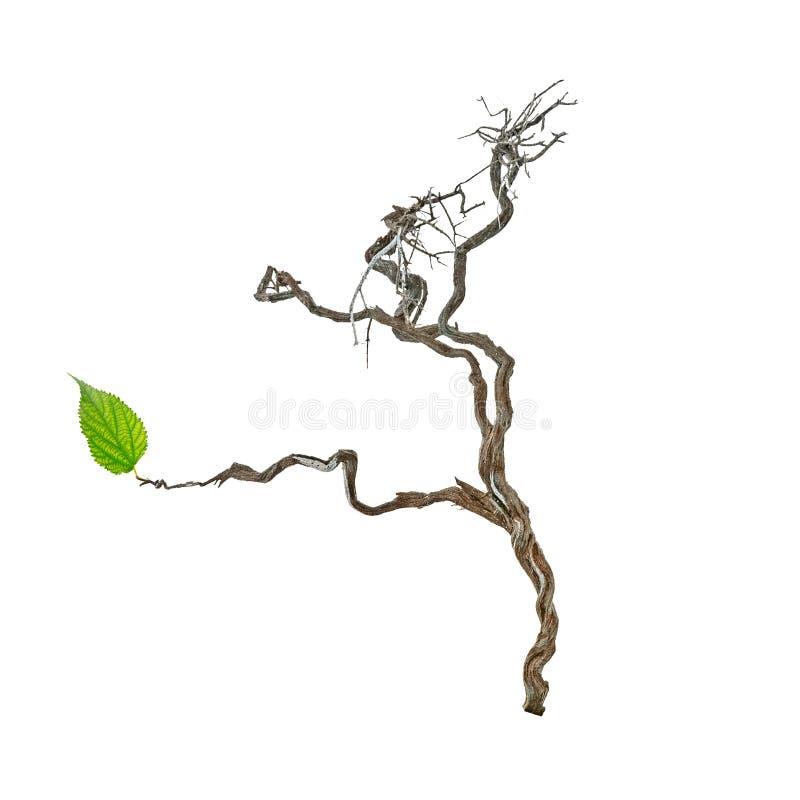 Trockene Niederlassung mit einem grünen Blatt stock abbildung