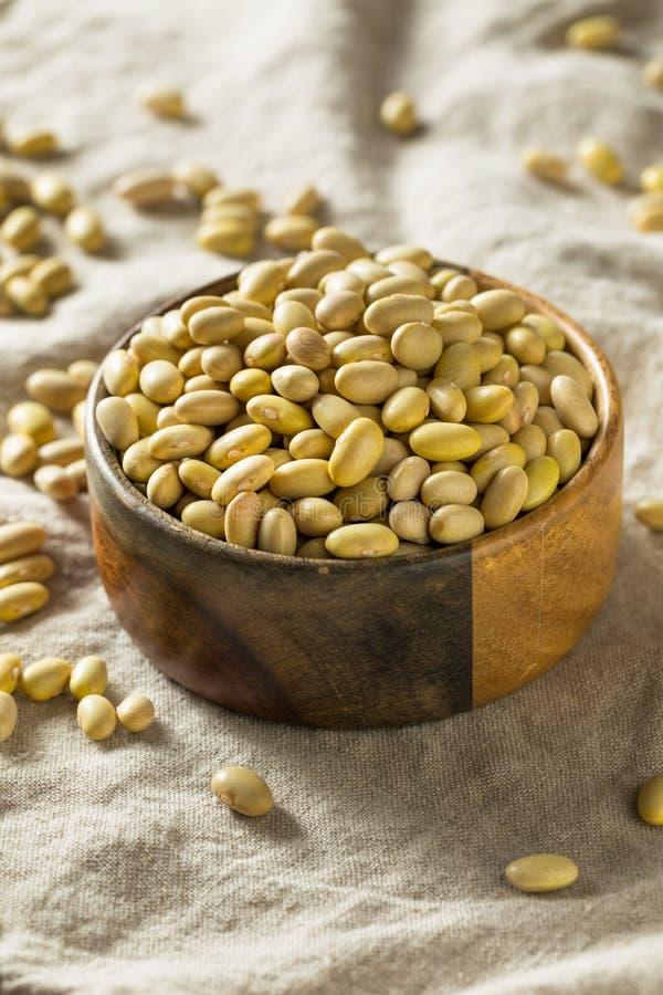 Trockene organische gelbe Mayocoba-Bohnen stockfoto