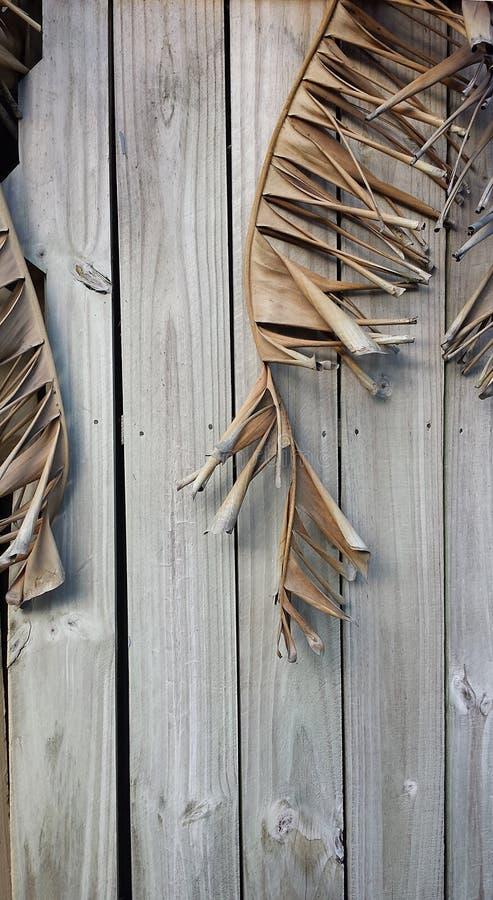 Trockene Palmwedel kurven gegen verwitterten Bretterzaun für viele Beschaffenheit lizenzfreie stockbilder