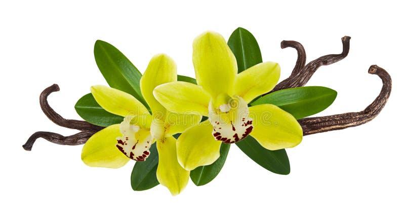 Trockene Stockbohnen der Vanille lokalisiert auf weißem Hintergrund mit Blume und grünem Blatt Aromagewürz für Lebensmittelinhalt lizenzfreie stockfotos