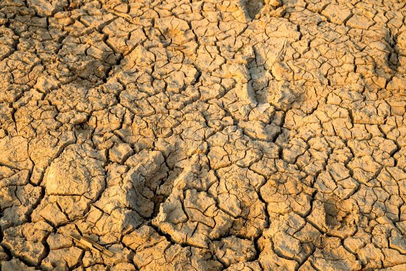 Trockene und gebrochene Erdgrundland oder -wüste mit menschlichem Abdruck lizenzfreie stockfotografie