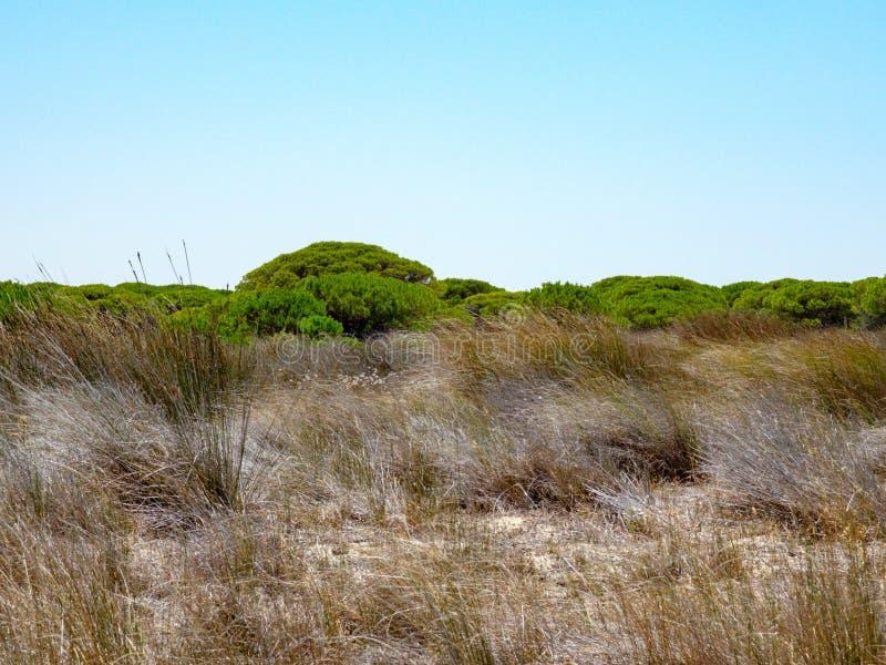 Trockene Wiese mit Baumgrenze mit intensiven grünen Oberteilen stockfotos