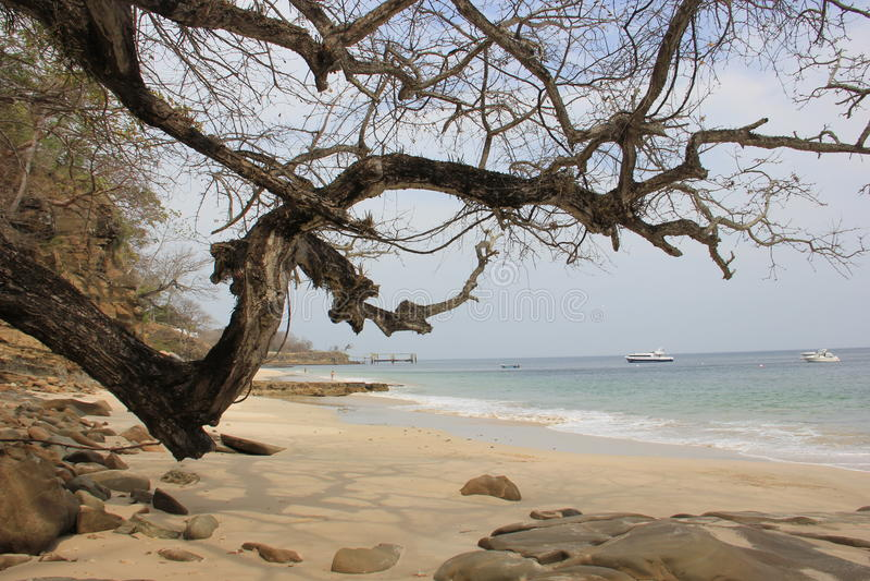 Trockener Baum über Strandsteinen stockbilder