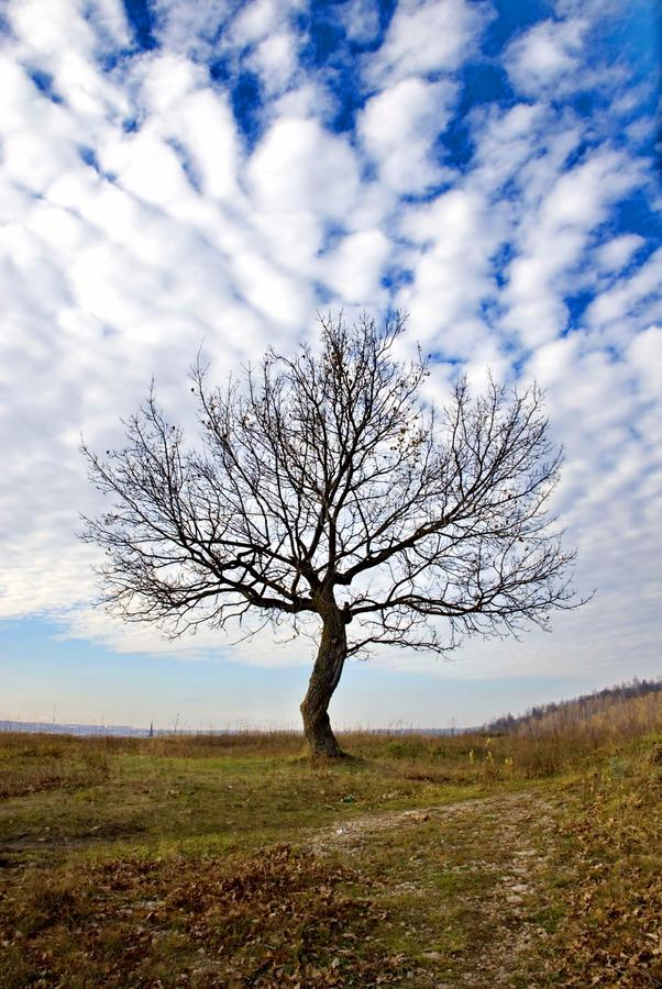 Trockener Baum stockfoto