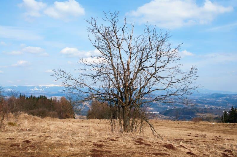 Trockener Baum in der Berglandschaft lizenzfreies stockfoto