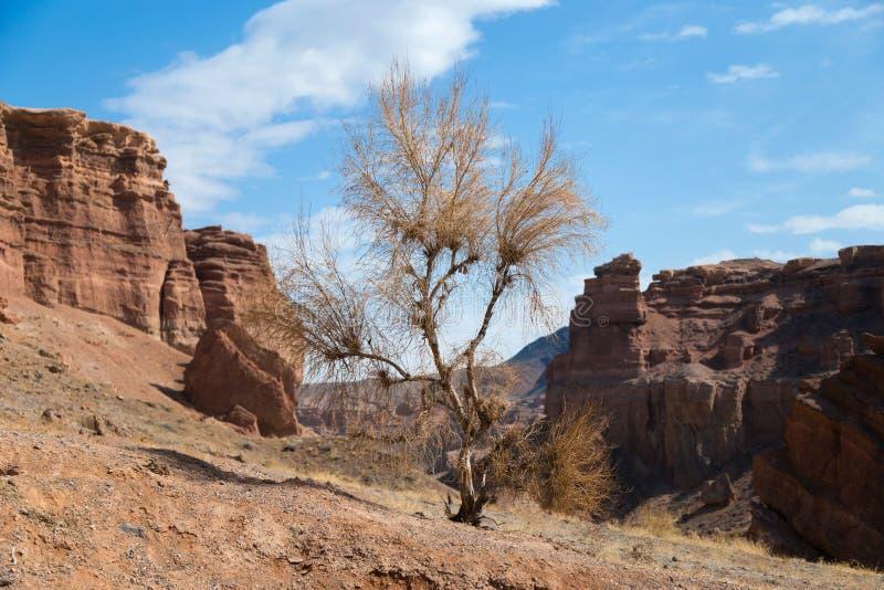 Trockener Baum in einer Schlucht stockfotografie
