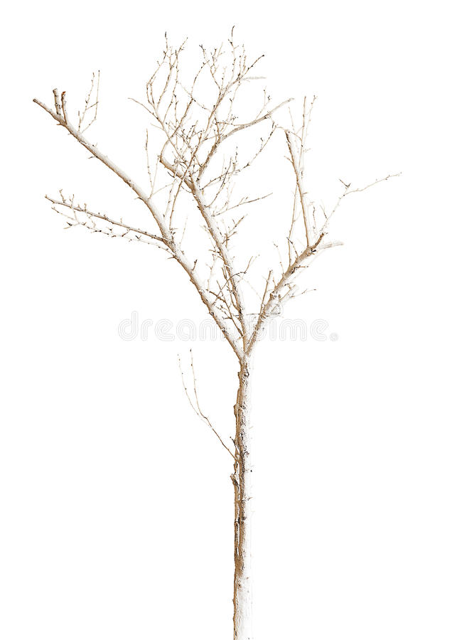 Trockener Baum Gemalt Mit Der Farbe Lokalisiert Auf Weissem