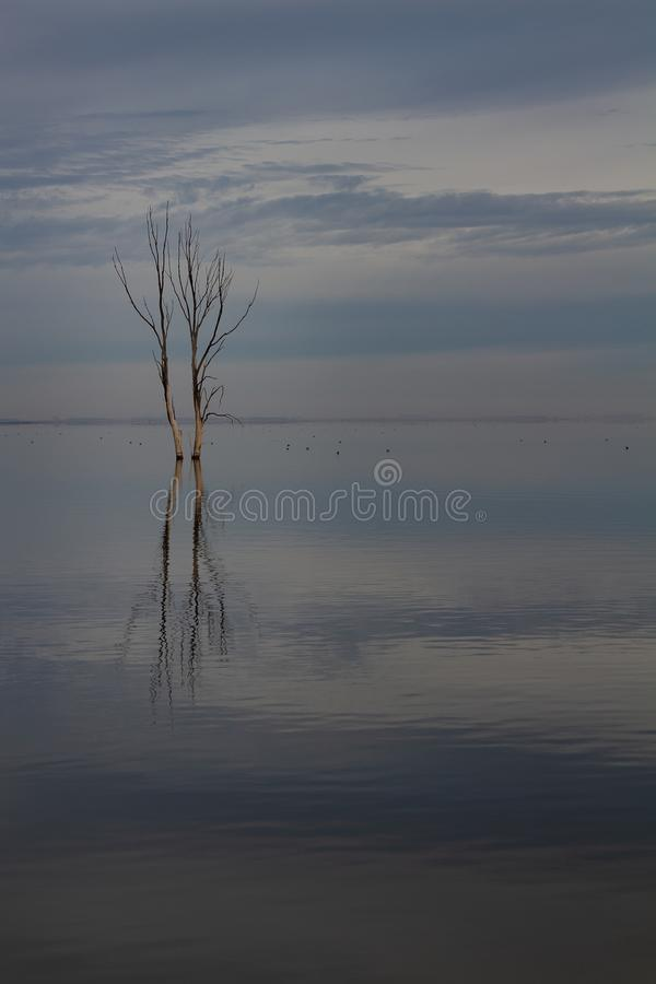 Trockener Baum im See lizenzfreies stockfoto