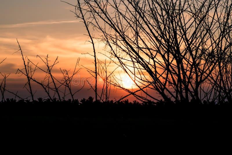 Trockener Baum ohne Blätter im Winter gegen orange Sonnenuntergangsonnenaufganghimmel schönen Landschaftshintergrund stockfotos