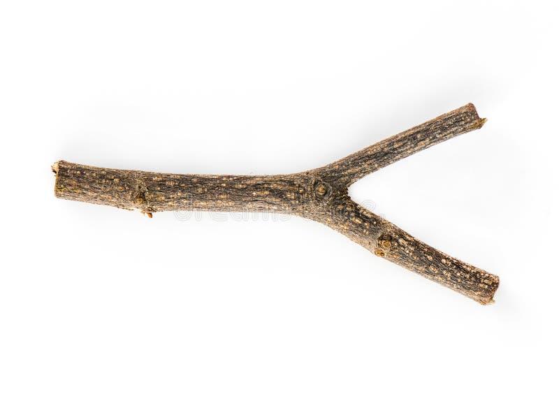 Trockener Baumast lokalisiert auf weißem Hintergrund stockfotos