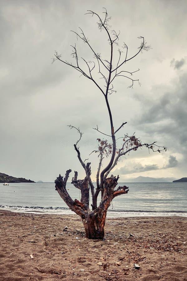 Trockener Baumstamm auf dem Strand stockfoto