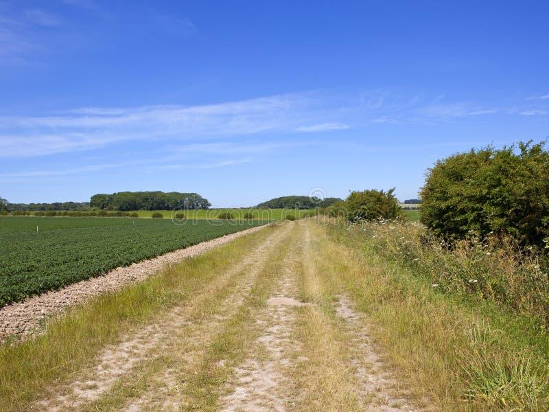 Trockener Feldweg mit Kartoffelackern und Hecken in der Sommerzeit lizenzfreie stockfotografie